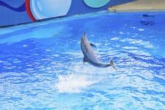 Dophin Show Stock Photo