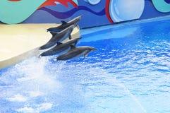 Dophin Show Royalty Free Stock Photos