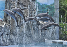 Dophin show Royalty Free Stock Photography