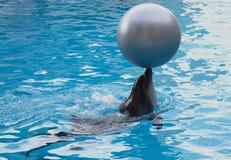 dophin z piłką Zdjęcie Royalty Free