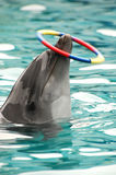 Dophins. A smart dolphins are doing wonderful acrobatics Royalty Free Stock Images