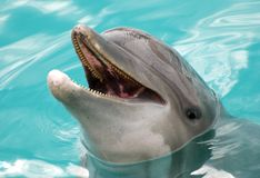 Dophins' Portrait Royalty Free Stock Photos
