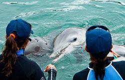 Doplhin die in gevangenschap in park Puerto Aventuras in Mexico, Yucatan wordt gehouden royalty-vrije stock foto