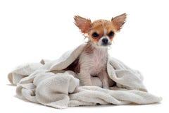 Cani sporchi immagine stock immagine di fangoso igienico - Bagno cane dopo antipulci ...