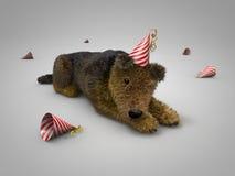 Dopo il cane del partito Fotografie Stock Libere da Diritti
