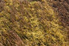 Dopo il raccolto del grano Fotografie Stock