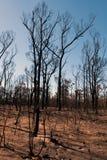 Dopo l'incendio di arbusti Immagini Stock Libere da Diritti