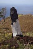 Dopo l'incendio forestale Fotografia Stock Libera da Diritti