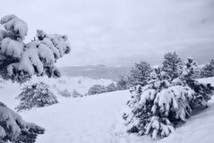 Dopo la bufera di neve a Fotografie Stock Libere da Diritti