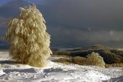 Dopo la bufera di neve Immagini Stock Libere da Diritti