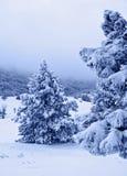 Dopo la bufera di neve b Fotografie Stock Libere da Diritti