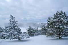 Dopo la bufera di neve c Fotografia Stock