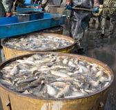 Dopo la pesca fuori Fotografia Stock Libera da Diritti