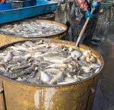 Dopo la pesca fuori Fotografie Stock Libere da Diritti