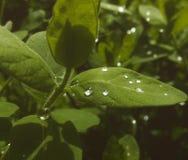 Dopo la pioggia Fotografie Stock Libere da Diritti