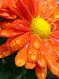 Dopo la pioggia Fotografia Stock Libera da Diritti