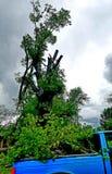 Dopo la tempesta? Grande albero del piccolo camion immagini stock libere da diritti