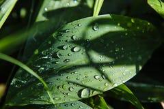 Dopo le gocce di pioggia sull'piante Immagine Stock