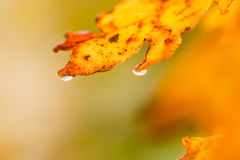 Dopo pioggia Fotografia Stock