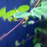 Dopo pioggia Fotografie Stock