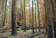 Dopo un gran incendio in aperta campagna Immagine Stock