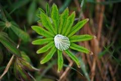 Dopo una pioggia di estate macro foto delle gocce di acqua (rugiada) sui gambi e sulle foglie delle piante verdi Immagine Stock