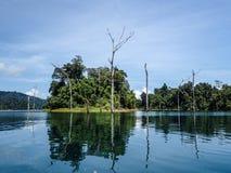 Doppad död skog och ö på Khao Sok arkivfoto
