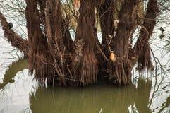 Doppad trädstam arkivbild