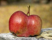 Doppeläpfel Lizenzfreies Stockbild
