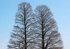 Doppelbäume stockfoto