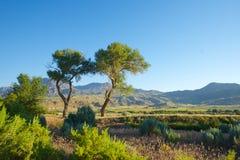Doppelbäume in Wyoming-Wiese Lizenzfreies Stockfoto