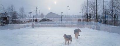 Doppelbelichtung außerhalb der Eisbahn mit Hund lizenzfreies stockbild