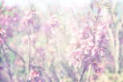 Doppelbelichtung des Frühlings-Kirschblütenbaums entziehen Sie Hintergrund Träumerisches Konzept Lizenzfreie Stockbilder