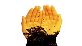 Doppelbelichtung, Mengen von Vögeln fliegen in und aus dem Baum zur Sonnenuntergangzeit mit den Kinderhänden stock footage