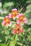 Doppelbelichtung von Blumengegenständen Stockfotos