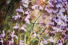 Doppelbelichtung von purpurroten Blumen und von geschnittenem Baumstamm Feld des grünen Grases gegen einen blauen Himmel mit wisp Stockbilder