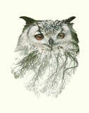Doppelbelichtungs-Porträt der Eule und des Baumasts Stockbild