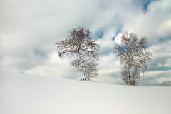 Doppelbirkenbaum auf bewölktem Himmel Lizenzfreies Stockfoto