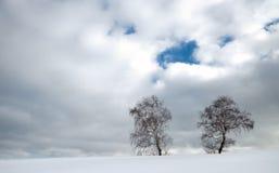 Doppelbirkenbaum auf bewölktem Himmel Stockfotos