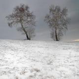 Doppelbirkenbaum im Schnee Stockfotografie