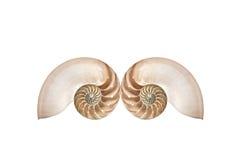 Doppelte Nautilusshells Stockfotografie