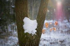 Doppelter Baum bedeckt mit Schnee Lizenzfreies Stockfoto
