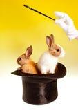 Doppelter magischer Trick mit Kaninchen stockfotografie