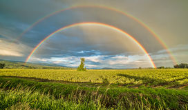 Doppelter Regenbogen über einem Baum Lizenzfreies Stockbild