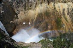 Doppelter Regenbogen am Fall Grand Canyon s von Yellowstone Nationalpark Lizenzfreies Stockbild