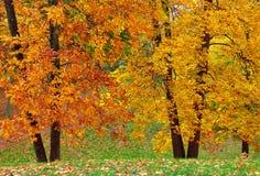 Doppi alberi Fotografia Stock