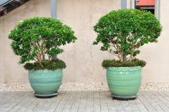 Doppi pianta-vasi messi sul pavimento del cemento. Fotografie Stock