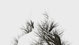 Doppia esposizione degli alberi di inverno e della siluetta immagine stock