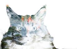 Doppia esposizione di un gatto, dei pesci rossi e degli alberi Immagine Stock Libera da Diritti