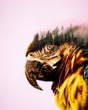 Doppia esposizione L'uccello e la foresta illustrazione vettoriale